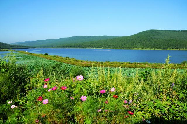 岭东区东湖旅游度假区荷花池