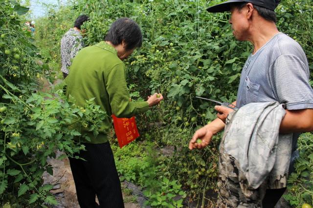 岭东区中双农业采摘园