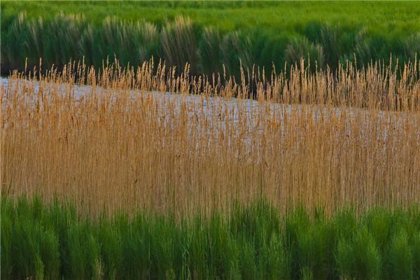 摄影:卞永平  作品名:《湿地情韵》               拍摄地点:双鸭山市七星河湿地