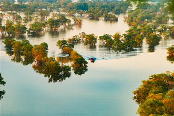 摄影:陈  新  作品名:《水天一色》               拍摄地点:双鸭山市饶河南湖湿地