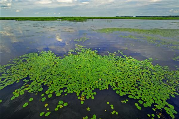 摄影:方殿君  作品名:《双鸭山湿地》             拍摄地点:双鸭山市大佳河湿地