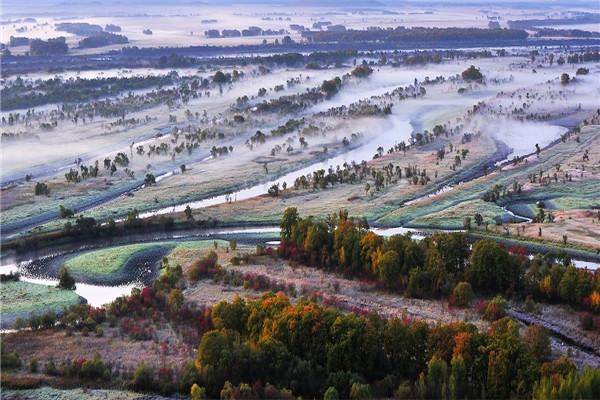 摄影:高金元  作品名:《湿地列阵》               拍摄地点:双鸭山市小木河湿地