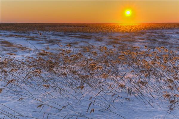 摄影:高明义  作品名:《冬雪》                   拍摄地点:双鸭山市七星河湿地