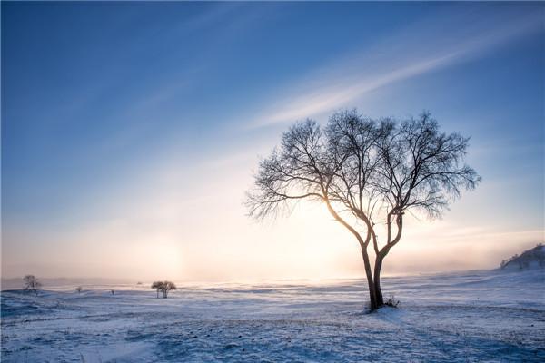 摄影:韩永灿  作品名:《寂静》                   拍摄地点:双鸭山湿地