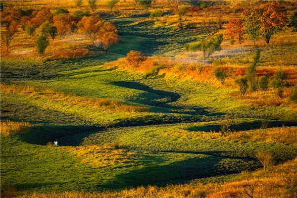 摄影:韩玉平  作品名:《秋染》                   拍摄地点:双鸭山市小木河湿地