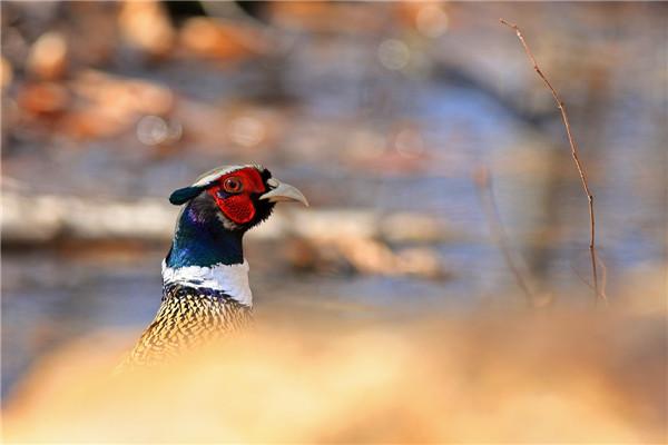 摄影:郝安林  作品名:《生命的眺望》             拍摄地点:双鸭山湿地