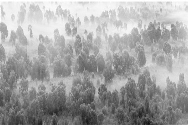 摄影:黄成江  作品名:《南湖湿地》               拍摄地点:双鸭山市饶河南湖湿地