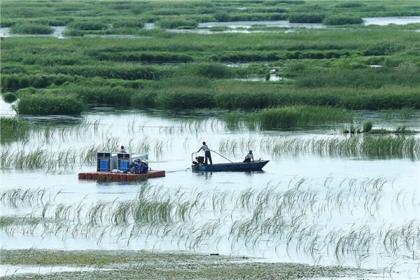 摄影:马广祥  作品名:《迁徙》                   拍摄地点:双鸭山市雁窝岛湿地