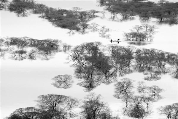 摄影:魏秀杰  作品名:《墨笔》                   拍摄地点:双鸭山市饶河南湖湿地