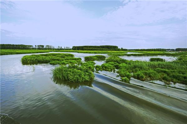 摄影:武普敖  作品名:《湿地》                   拍摄地点:双鸭山市雁窝岛湿地