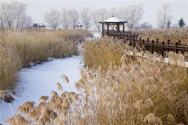 摄影:许春娟  作品名:《安邦河湿地》            拍摄地点:双鸭山市安邦河湿地