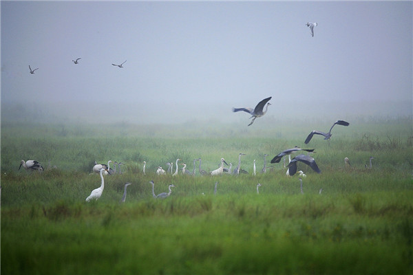 摄影:杨荣贵  作品名:《湿地情怀》              拍摄地点:双鸭山市雁窝岛湿地