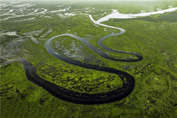 摄影:于国军  作品平:《鸟瞰湿地》              拍摄地点:双鸭山市挠力河湿地