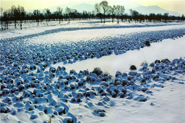 摄影:张华林  作品名:《湿地之冬》              拍摄地点:双鸭山市挠力河湿地