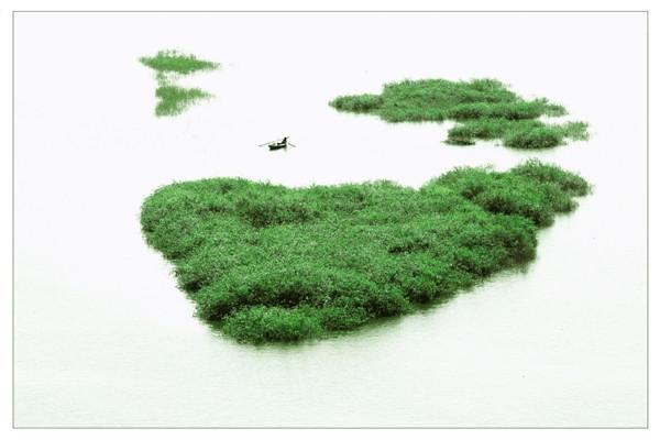 摄影:张化明  作品名:《绿舟》                  拍摄地点:双鸭山市七星河湿地