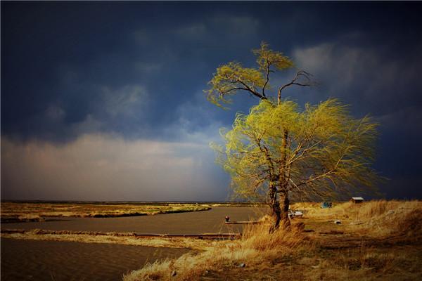 摄影:张建军  作品名:《风雨欲来》              拍摄地点:双鸭山市雁窝岛湿地