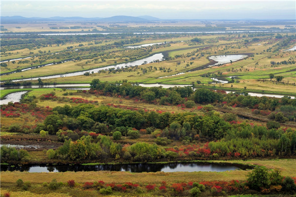 摄影:张  旭  作品名:《秋意浓浓》              拍摄地点:双鸭山市小木河湿地