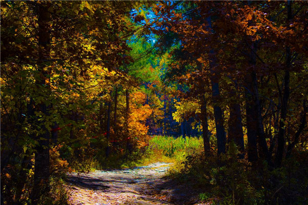 摄影:双协会  作品名:《秋色》                  拍摄地点:双鸭山市笔架山水库