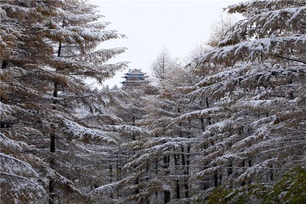 摄影:孙伟山  作品名:《故园之恋》              拍摄地点:双鸭山市